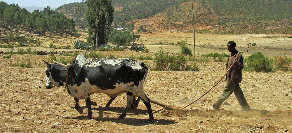 Farmer and his plough