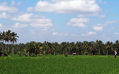 Through the Ubud rice fields with an e-Bike