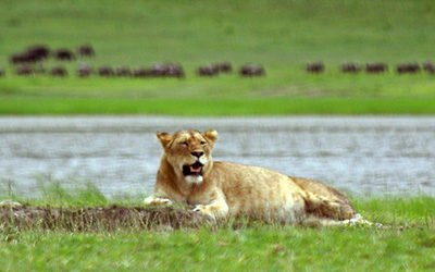 Top 5 best safari parks of Tanzania