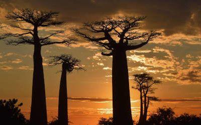 Allée des Baobabs, Madagascar's most famous road