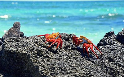 Special animals on the Galapagos Islands