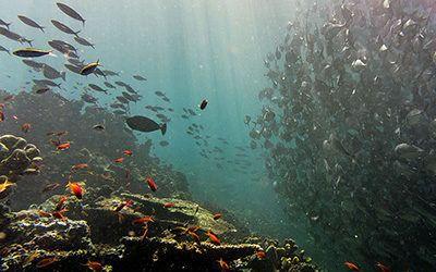 Diving at Sipadan – Malaysia